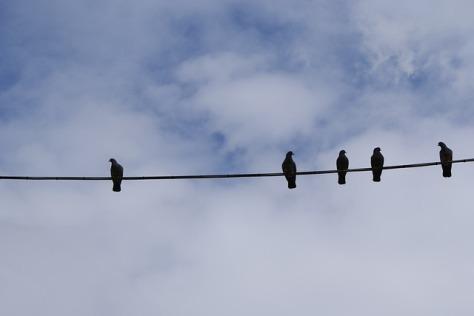 birds-430136_640