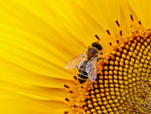 sun-flower-1643794_640