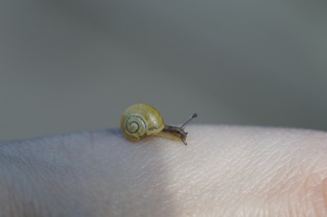 crawling-snails-794034_640